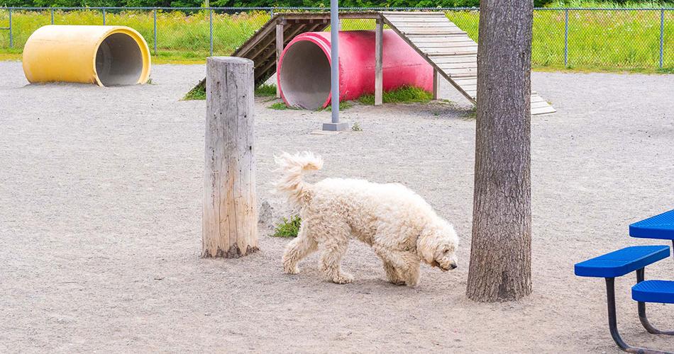 Chien dans le parc canin des Bolivars