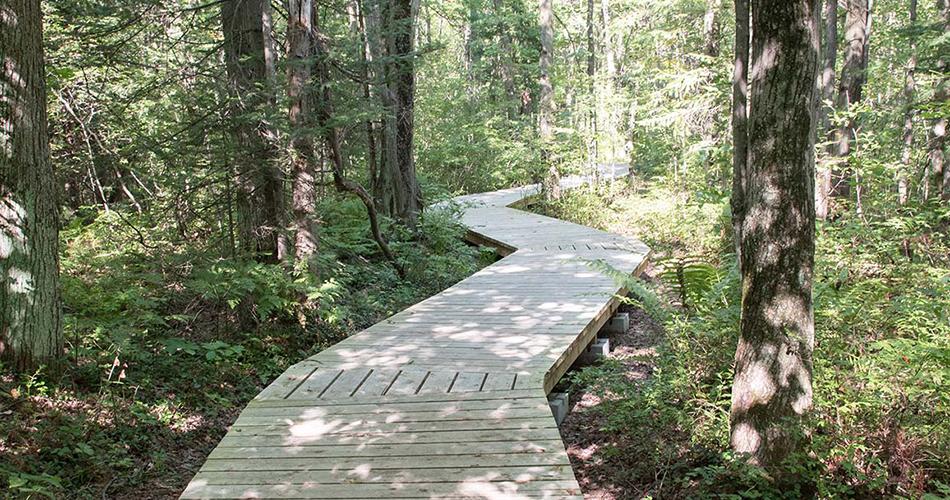 Sentier aménagé du boisé du Plan Bouchard